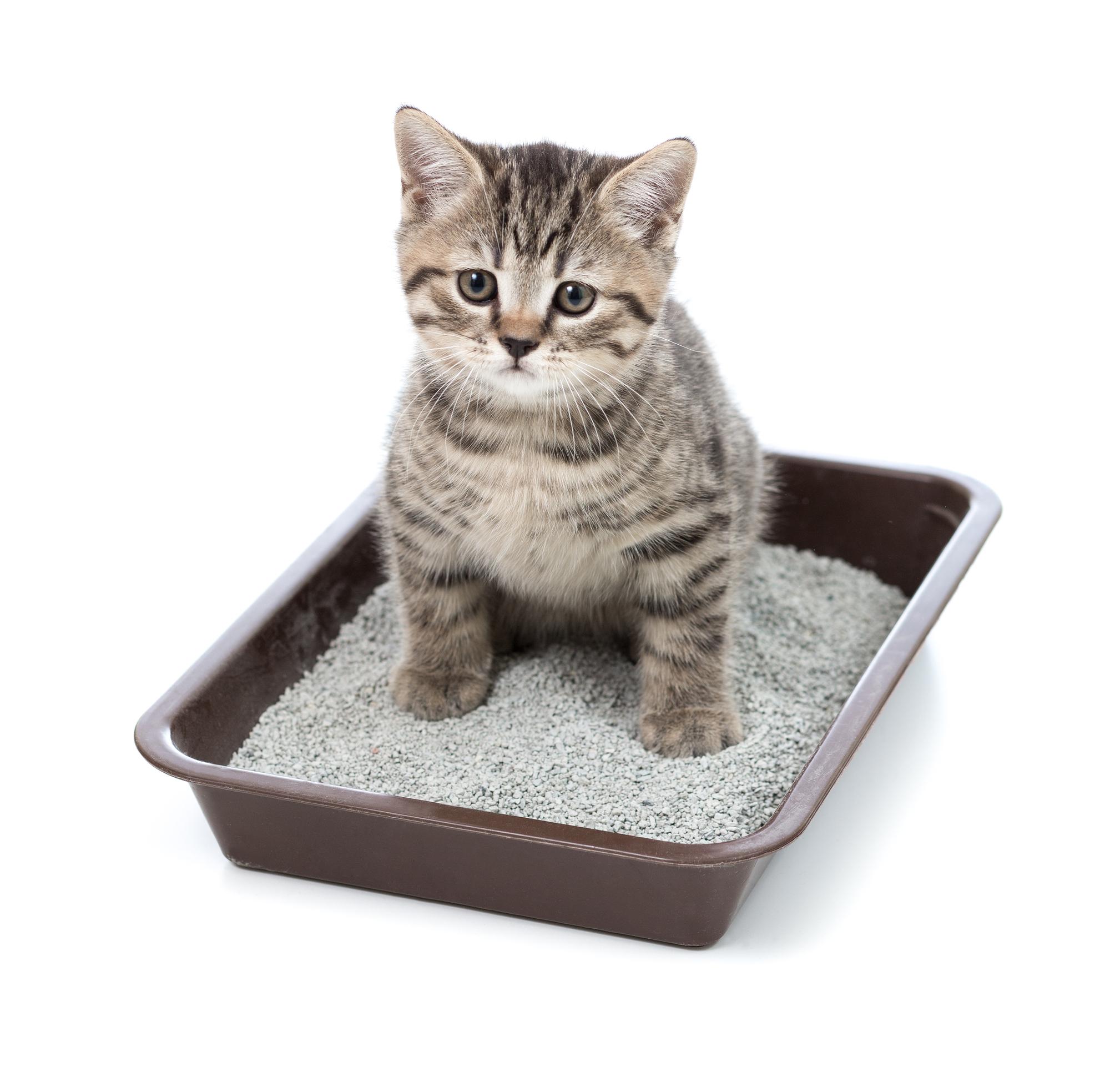 ทรายแมวที่ดีที่สุด